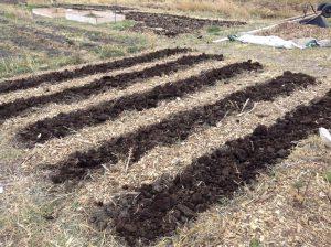 Broadfork Rows Freshly Tilled