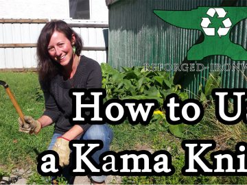 Harvesting with a Kama (Japanese Sickle)